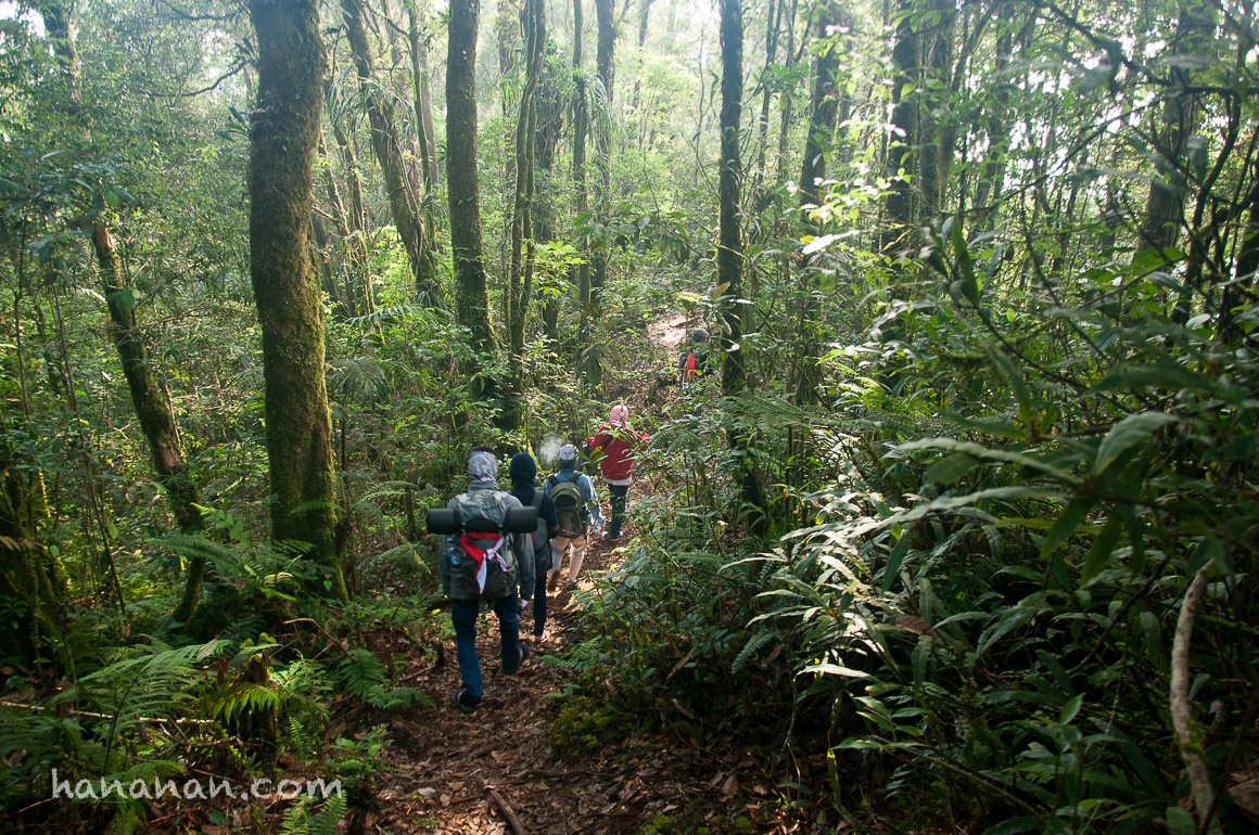 Pendakian Tak Terduga ke Gunung Kencana –Puncak