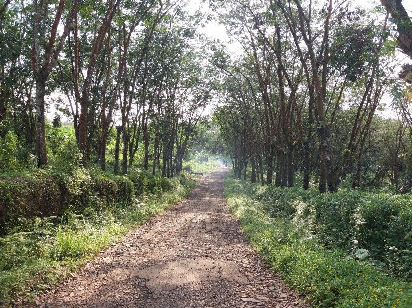 Kondisi jalan menuju Curug Munding.